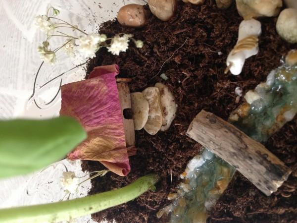 Herban Garden3